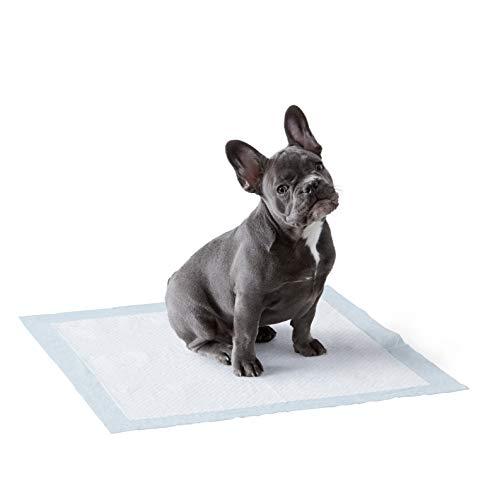 Amazon Basics - Toallitas de entrenamiento para mascotas (tamaño regular, 100 unidades)